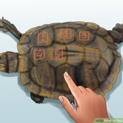 Diagram Turtle S Head Truck Light Wiring How To Tell A Age By Rings And Size Wikihow Image Titled Step 2