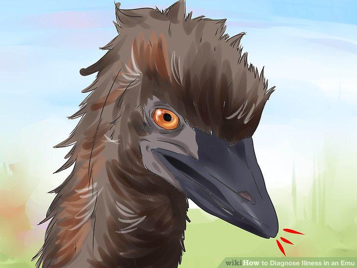 Sehen Sie, ob der Vogel hustet, nach Luft schnappt oder ungewöhnlich atmet.