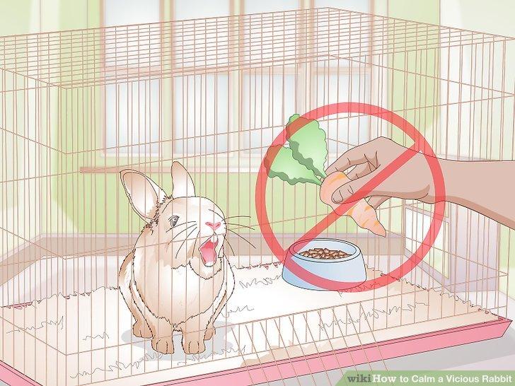 Verstehen Sie, dass Kaninchen oft territorial sind.
