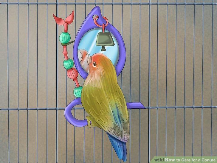 Ziehen Sie in Betracht, einen Spiegel in Ihren Conure-Käfig zu stellen.