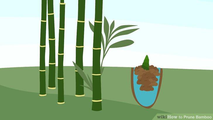 Machen Sie gerade Schnitte über den Bambusstiel.