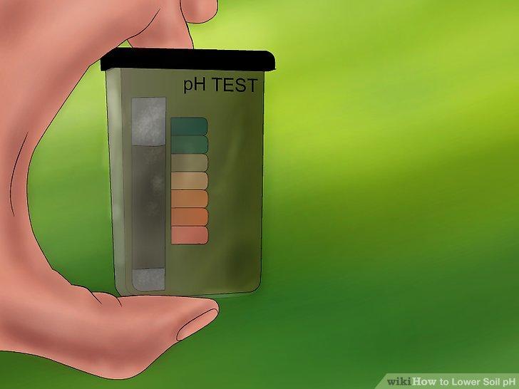 Testen Sie den pH-Wert des Bodens.