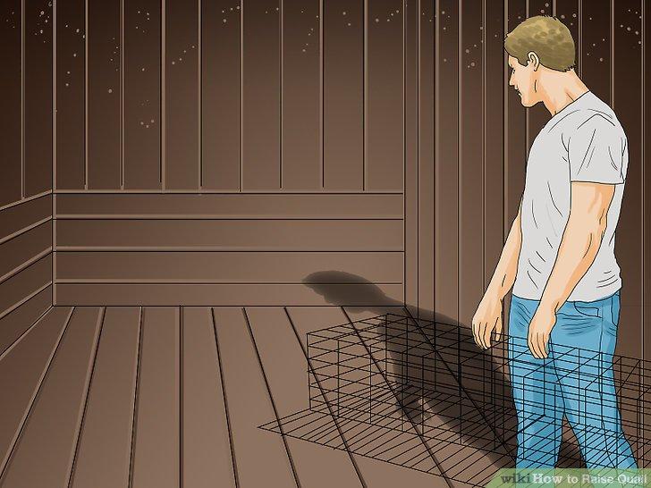 Finden Sie einen Platz in Ihrem Garten oder auf Ihrem Balkon, wo Sie einen Wachtelkäfig aufhängen können.