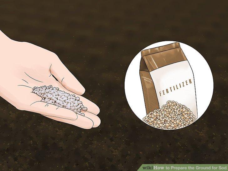Fügen Sie einen Dünger hinzu, sobald Sie Ihre Bodentestergebnisse zurückerhalten haben.
