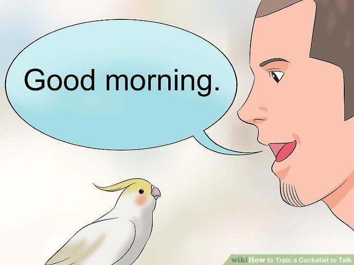 Stellen Sie den Vogel jeweils einer Phrase vor.