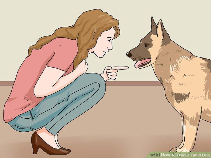 Widme dich dafür, deinem Hund zu helfen.