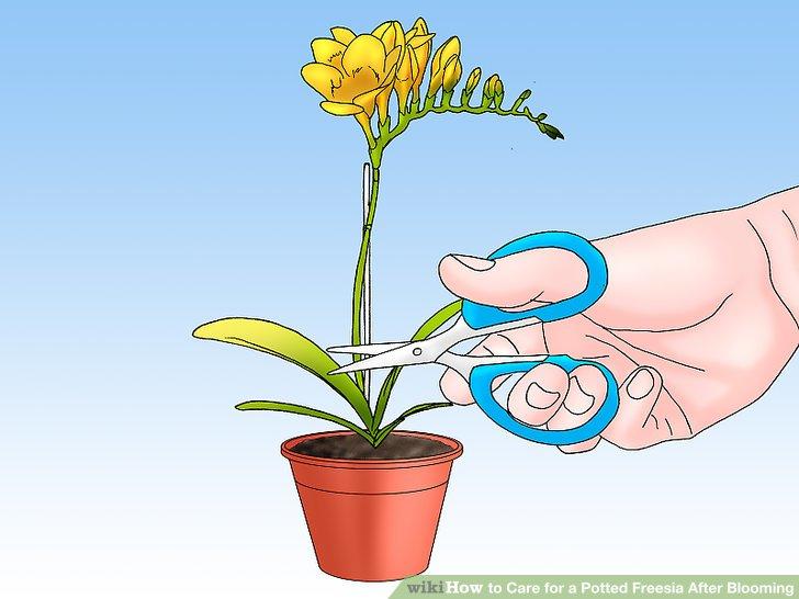 Beschneiden Sie Ihre Pflanze.