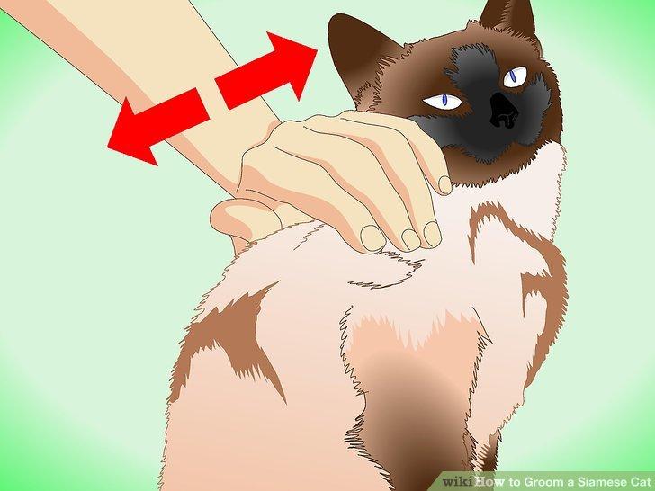 Wenn sich Ihre Katze der Pflege widersetzt, wenden Sie beruhigende Strategien an.