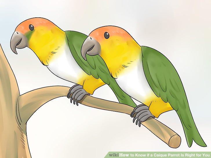 Erwägen Sie, zwei Vögel zu bekommen, wenn Sie tagsüber arbeiten.