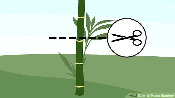 Befruchten Sie Ihre Bambuspflanzen im Frühjahr.