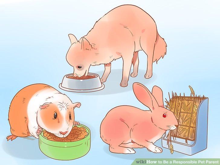 Füttere dein Haustier mit einer gesunden Ernährung.