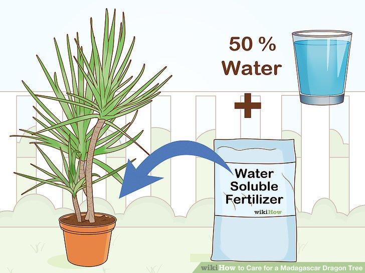 Verwenden Sie Zimmerpflanzendünger einmal im Monat, außer im Winter.
