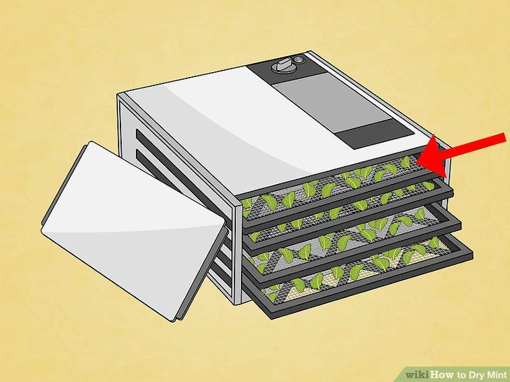 Verteilen Sie die Minzblätter auf einer mikrowellenfesten Platte.