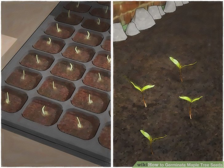 Plant the seeds.
