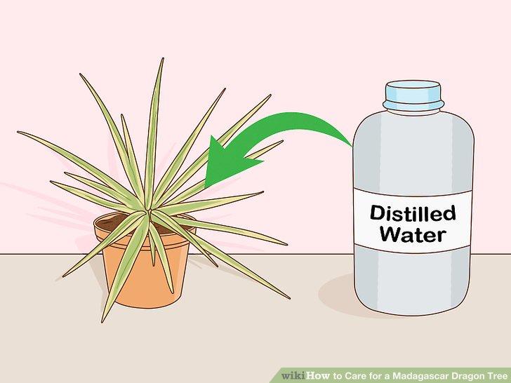 Verwenden Sie in einem Behälter mit Drainagelöchern gut durchlässigen Blumenerde.