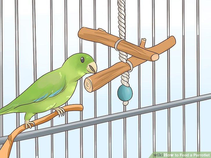 Bieten Sie Ihrem Papagei etwas Holz zum Kauen an.