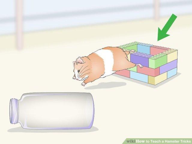 Teach a Hamster Tricks Step 9 Version 2.jpg