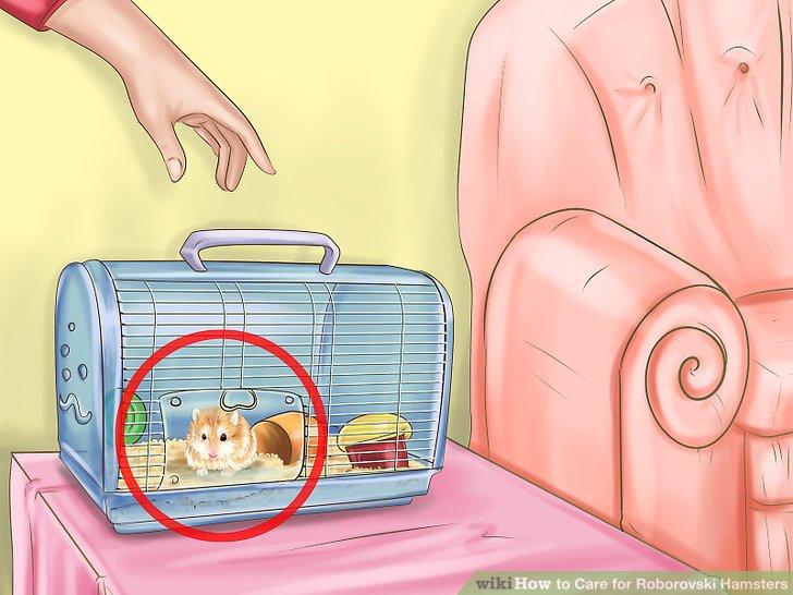Bringen Sie Ihren Hamster so schnell und sicher wie möglich nach Hause.