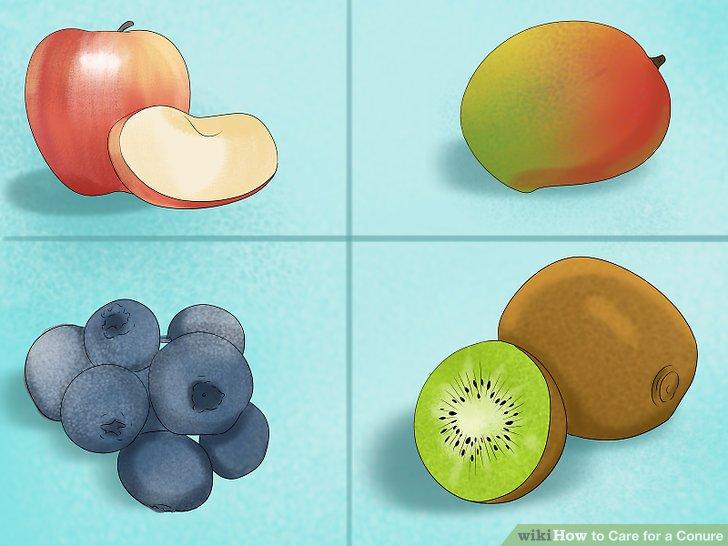 Fügen Sie Ihrer Conure-Diät frisches Obst und Gemüse hinzu.