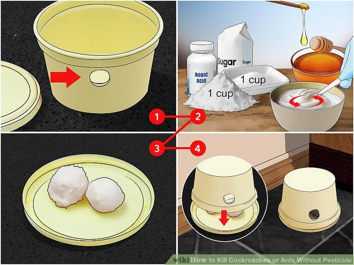 Make a boric acid trap.