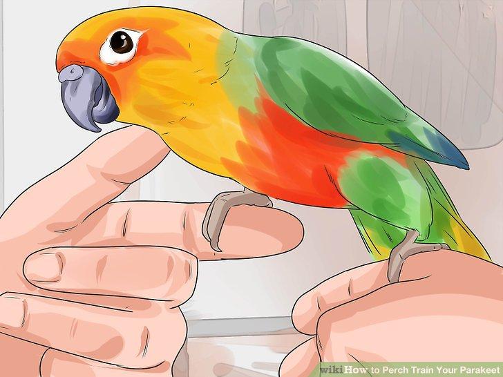 """Trainiere deinen Vogel zur """"Leiter"""" zwischen den Fingern."""