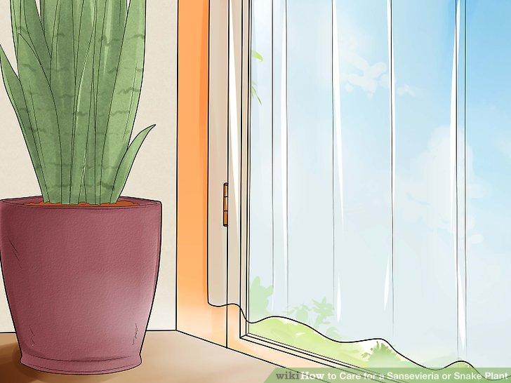 Verwenden Sie die Gardinen, um tagsüber intensives Sonnenlicht zu filtern.