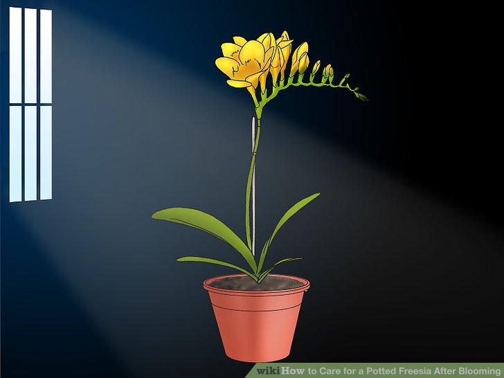 Bewegen Sie Ihre Topfpflanze an einen kühlen, dunklen Ort.