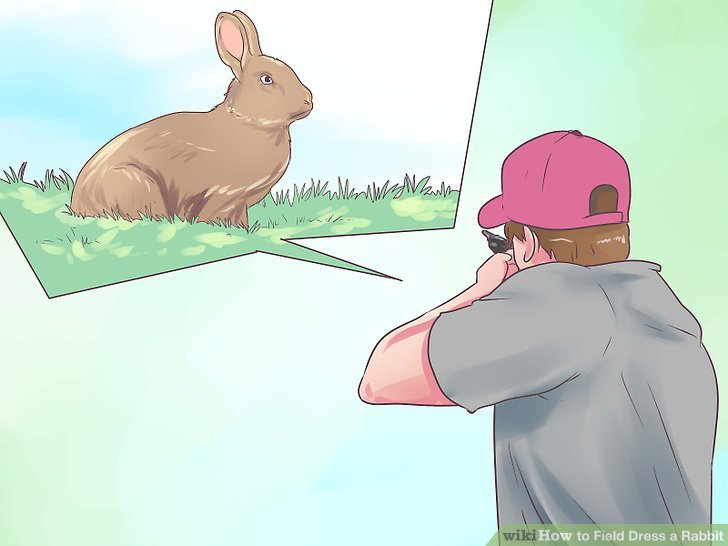 Harvest the rabbit as humanely as possible.