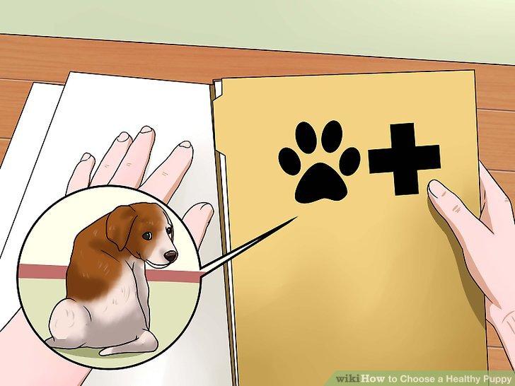 Fragen Sie nach früheren Tierarztakten.