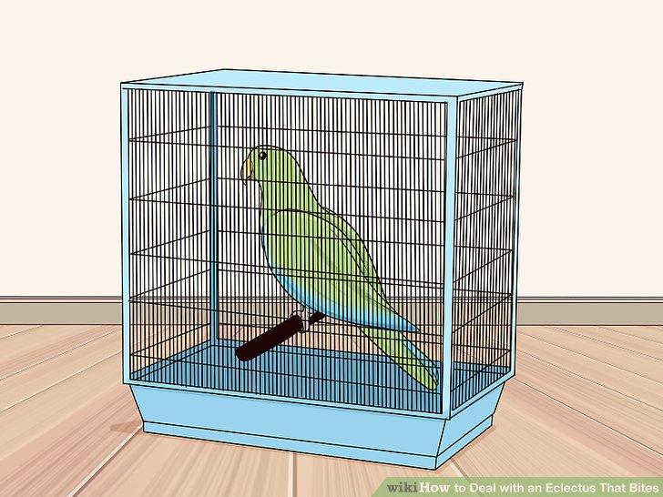 Laden Sie Ihren Vogel aus dem Käfig, wenn er territorial ist.