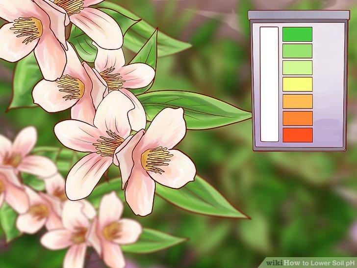 Züchten Sie alkalisch tolerante Pflanzen.