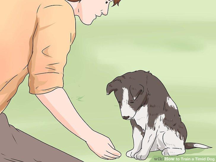 Verdienen Sie das Vertrauen Ihres Hundes.