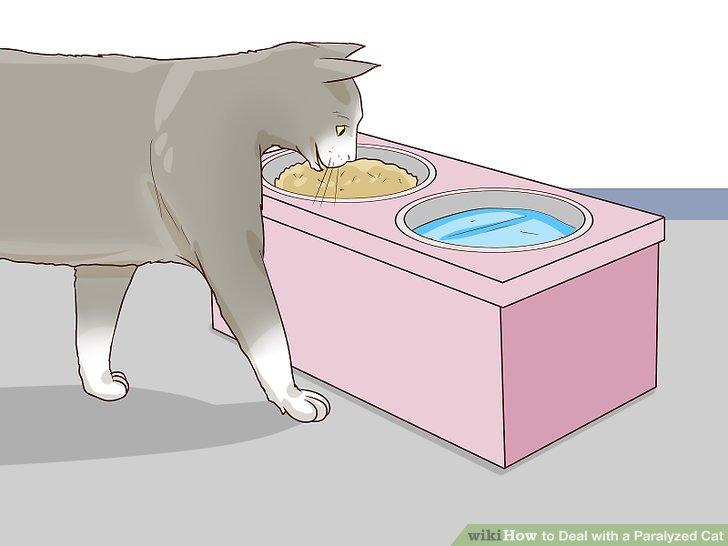 Versorgen Sie Ihre Katze mit zugänglichen Speisen und Wassergerichten.