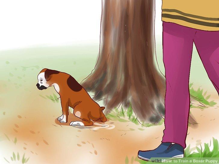 Haus trainieren Sie Ihren Hund.