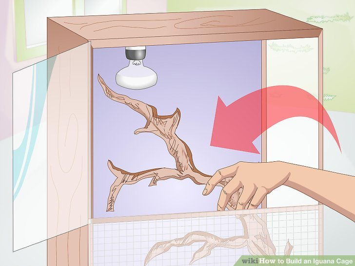 Install a ramp, shelving, perches, or branches, or add small trees inside the cage.