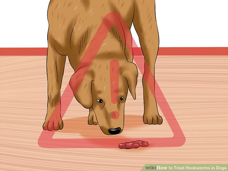 Understand how dogs become infected.