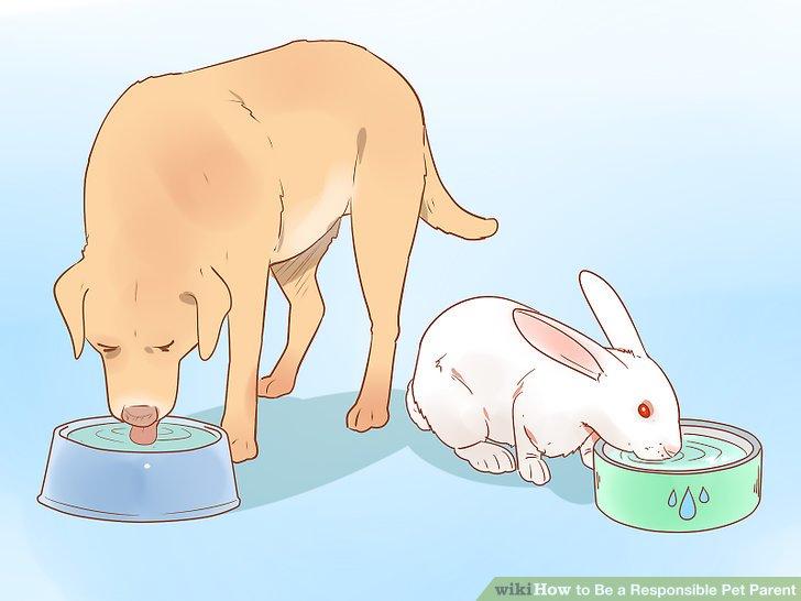 Stellen Sie Ihrem Haustier jederzeit sauberes Wasser zur Verfügung.