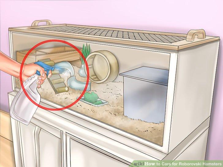 Reinigen Sie den Lebensraum einmal pro Woche.