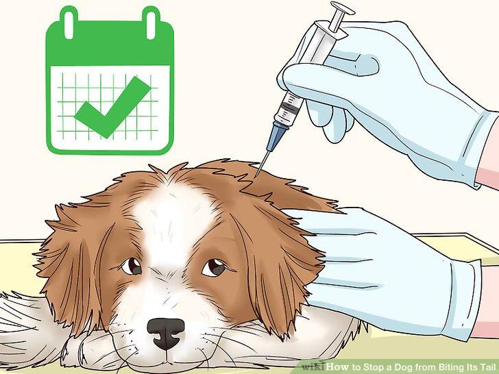 Lassen Sie Ihren Hund regelmäßig entwurmen.