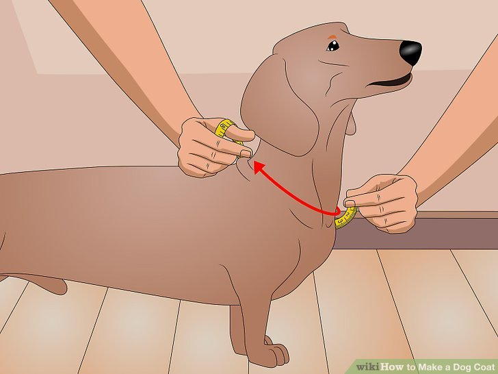 Messen Sie um den Hals des Hundes.