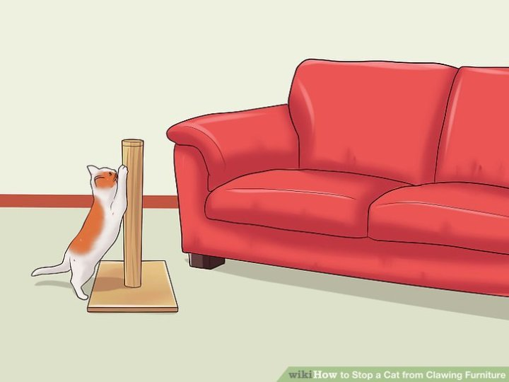 How Do I Stop My Cat Scratching New Sofa