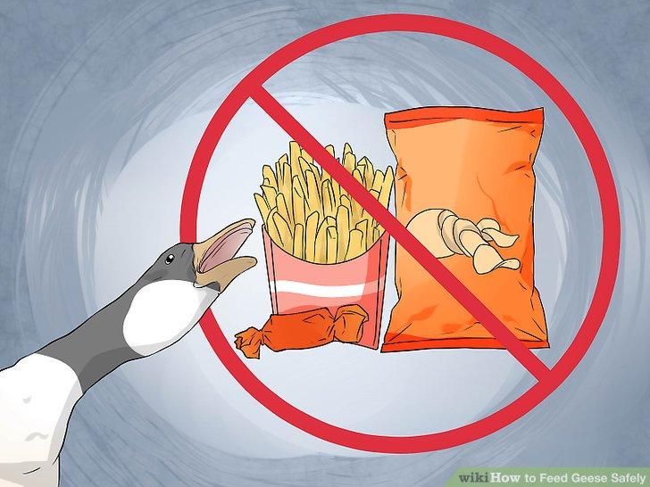 Füttern Sie keine mit Gänsen verarbeiteten Lebensmittel.