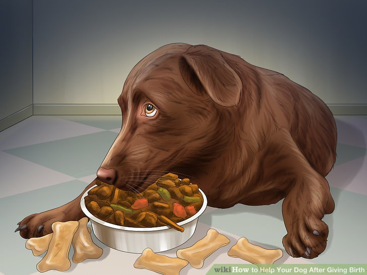 Feed puppy food to your pregnant dog during the final 1/3 of her pregnancy.