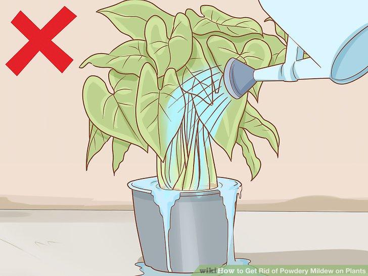 Bewässerung vermeiden.