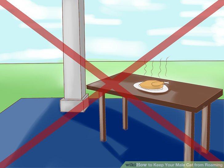Lassen Sie Nahrungsquellen nicht draußen.