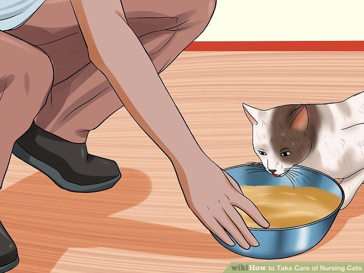 Vergewissern Sie sich, dass Sie Futter für laktierende Katzen zur Verfügung stellen.