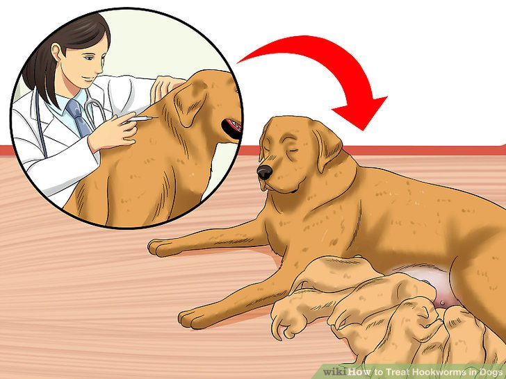 Be sure you have treated breeding dogs.