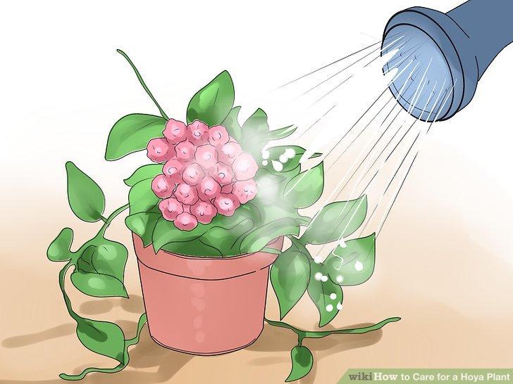 Wässern Sie Ihre Pflanze, bevor Sie sie düngen.