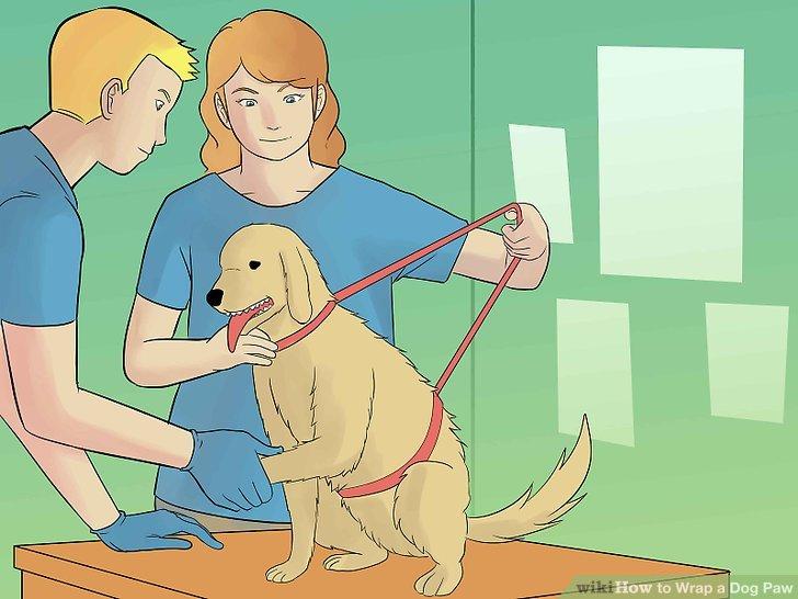 Halten Sie den Hund still.