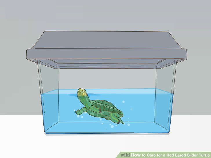 Purchase your turtle.